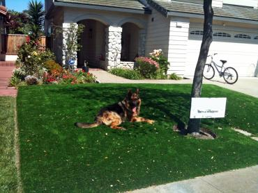 Artificial Turf Cost Sallisaw, Oklahoma Pictures Of Dogs, Dogs Runs artificial grass