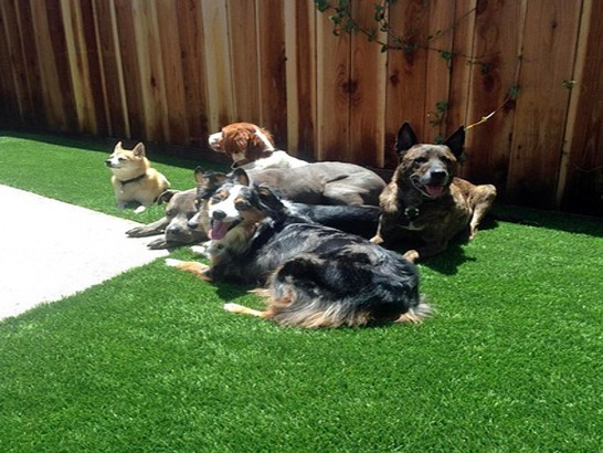 Faux Grass Seminole, Oklahoma Dog Hospital, Backyard Garden Ideas artificial grass